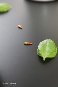 kuerbis-spinat-auflauf-7