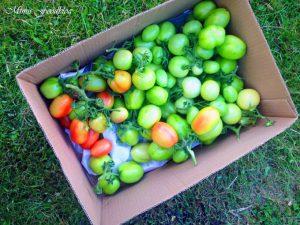 Start in die Gartensaison mit eBay Home Garden 15