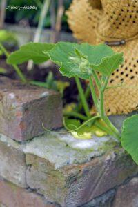 pflanzen ernten naschen Urban Gardening denn Sommerzeit ist Balkonzeit meinkleinergarten 10