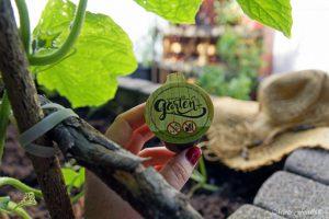 pflanzen ernten naschen Urban Gardening denn Sommerzeit ist Balkonzeit meinkleinergarten 14