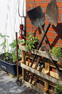 pflanzen ernten naschen Urban Gardening denn Sommerzeit ist Balkonzeit meinkleinergarten 18