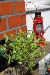 pflanzen ernten naschen Urban Gardening denn Sommerzeit ist Balkonzeit meinkleinergarten 2